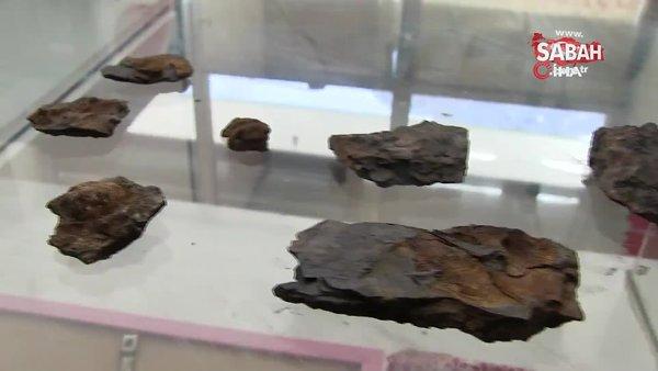 Şırnak'ta dağ yamacında bulunan şaşırtan canlı fosili kamerada | Video