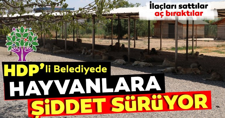 Diyarbakır'da HDP'li belediyenin hayvan barınağında şiddet sürüyor!
