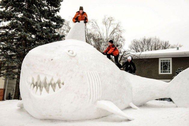 16 metrelik kardan köpek balığı