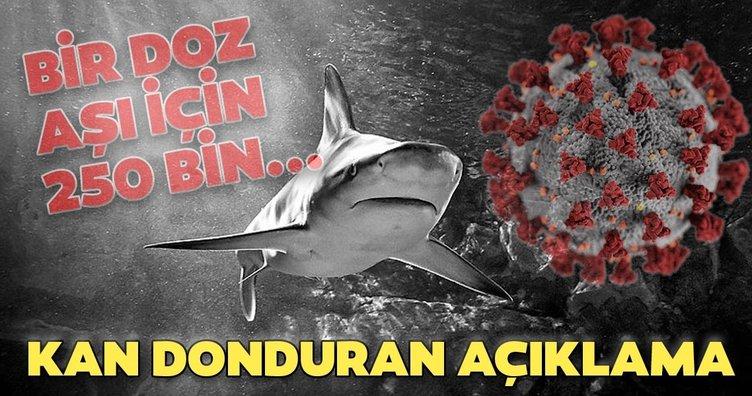 Son dakika: Koronavirüs aşısı ile ilgili kan donduran açıklama! Bir doz için 250 bin köpek balığı...