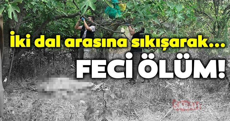 Bursa'da feci ölüm... Ağaçta boynu dalların arasına sıkışan çiftçi öldü