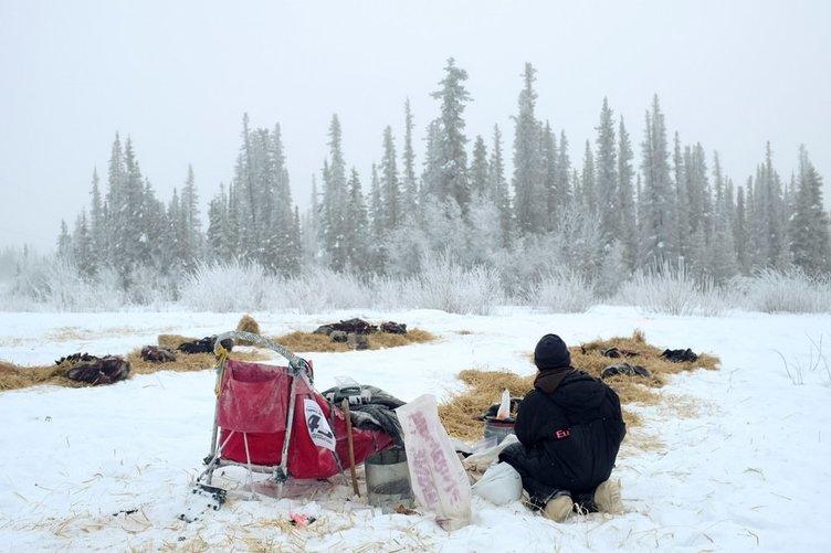 """Onlar kar savaşçısı """"Alaska kurtları"""""""