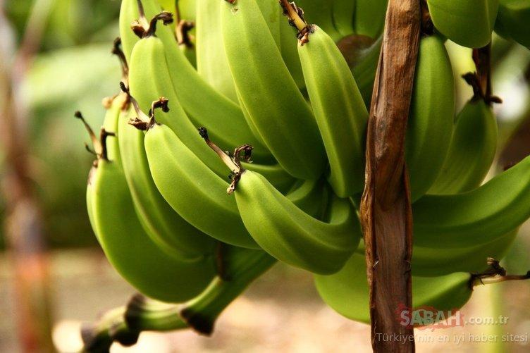 Bu besinlerin zayıflattığı kanıtlandı! İşte zayıflatan mucize besinler...