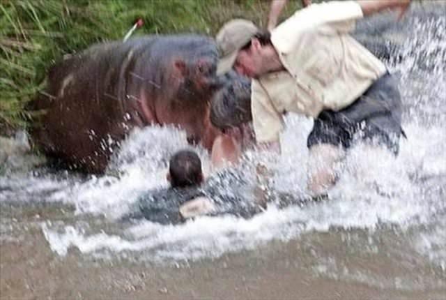 Su aygırı doktora böyle saldırdı