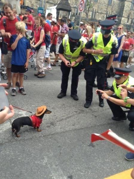 Komik polisler
