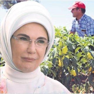 Emine Erdoğan'ın diktiği fidelerin ürünleri hasat edildi