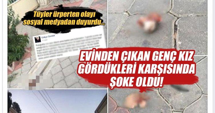 İzmir'de kedi katliamı! Hayvansever genç kız sosyal medyadan duyurdu...