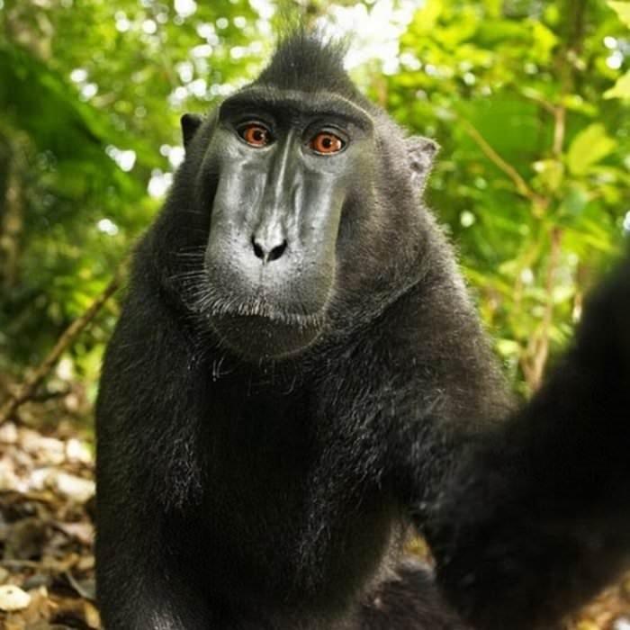 Hayvanların komik selfie'leri