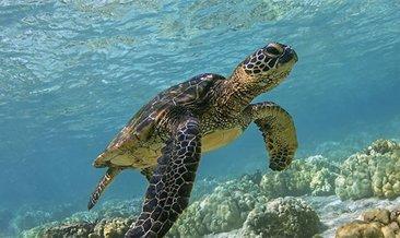Rüyada Kaplumbağa görmek ne anlama gelir? Rüyada Kaplumbağa görmek nasıl yorumlanır?