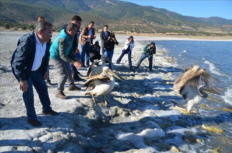 Pelikanlar Burdur Gölü'ne salındı