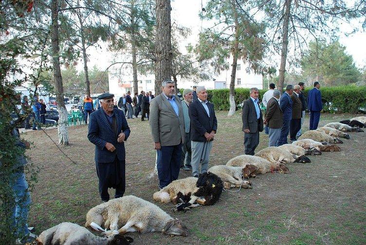 Samsat'ta, şükür kurbanları kesildi