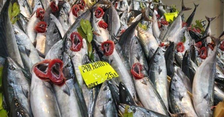 Palamut azaldı fiyatı 15 liradan 25 liraya çıktı