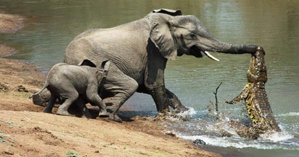 Doğanın yırtıcı hayvanları