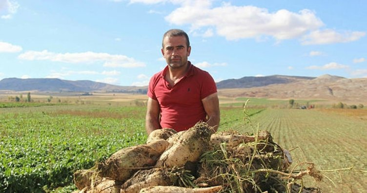 Sivas'ta şeker pancarı hasadı başladı