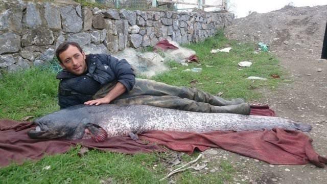 İznik Gölü'nde 87 kilogramlık yayın yakalandı