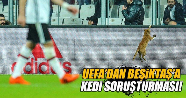 UEFA'dan Beşiktaş'a kedi soruşturması!