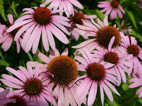 Dünyanın en faydalı 12 bitkisi