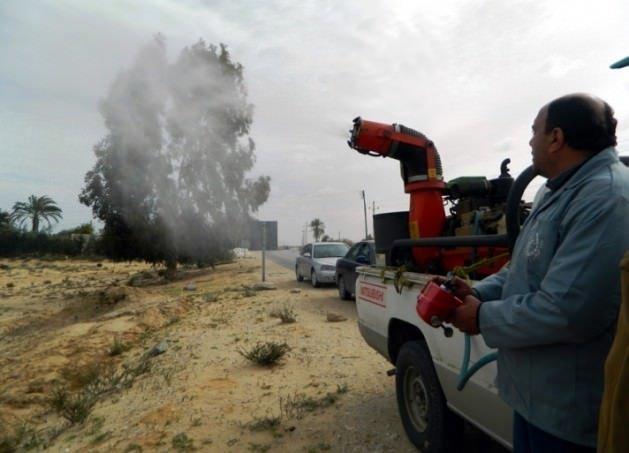 İsrail'i şimdi de çekirge korkusu sardı