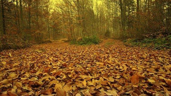 Uludağ'da sonbahar