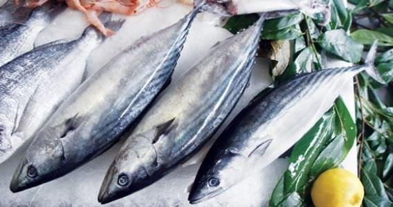 Hangi balık hangi ayda yenmelidir