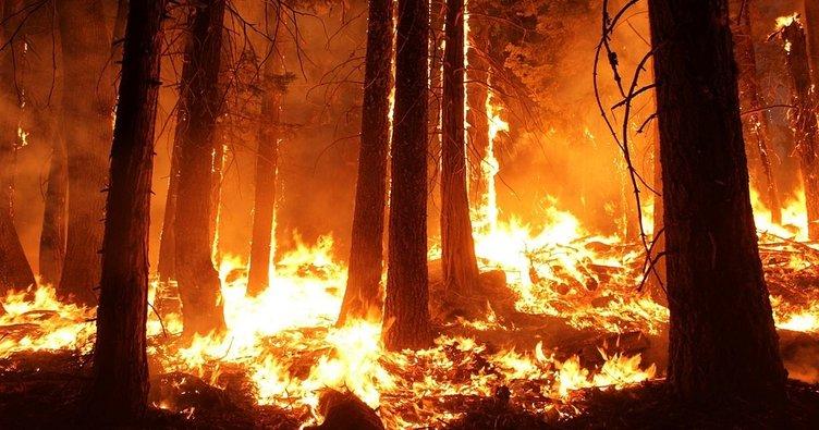 Meteoroloji'den orman yangını uyarısı!