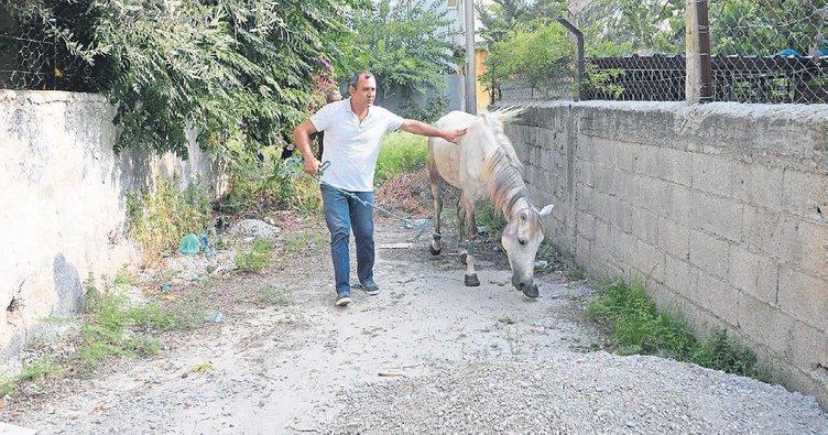 Ölüme terk edilen yaralı ata hayvanseverler sahip çıktı