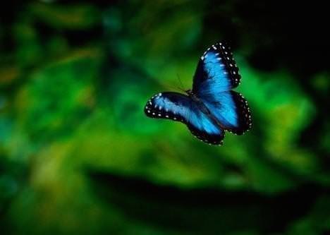 İşte doğanın mavi canlıları