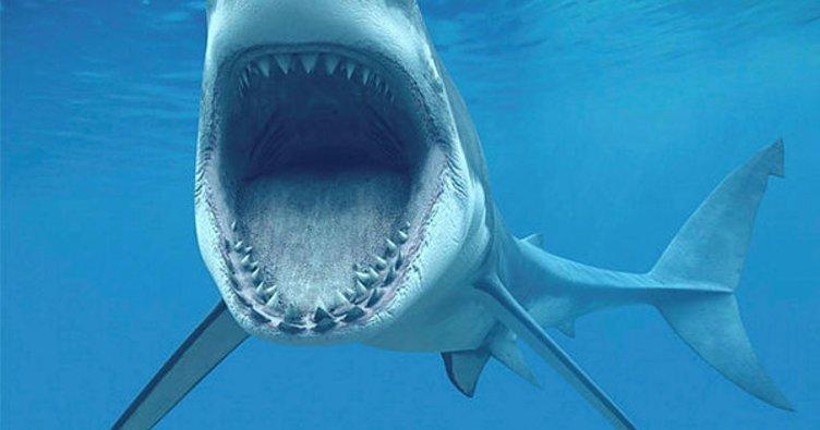 ABD'de sahilde köpekbalığı paniği
