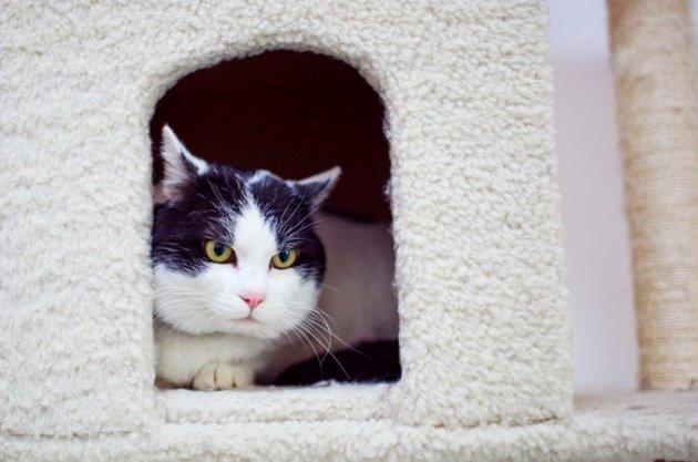 İslam'da özel bir hayvan: Kedi