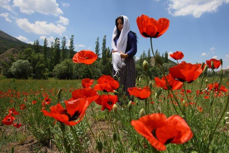 Giresun'da çiçekler görsel şölen oluşturuyor