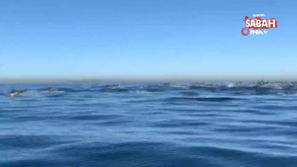 California'da dev yunus sürüsünün etkileyici geçişi görüntülendi   Video