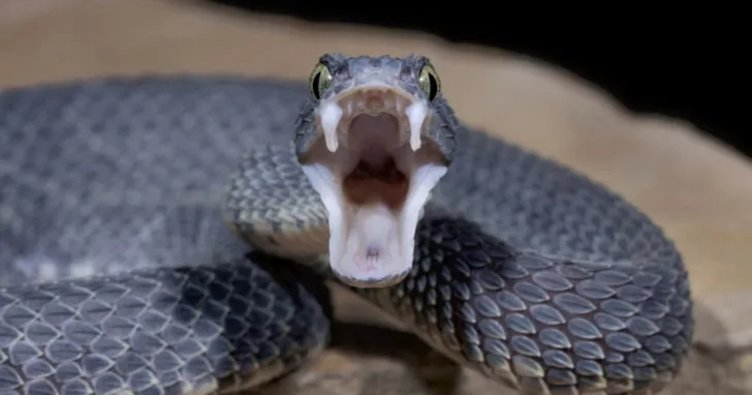 Rüyada yılanla konuşmak ve çok sayıda yılan görmek ne anlama gelir? Rüyada yılan görmek ile ilgili tabirler
