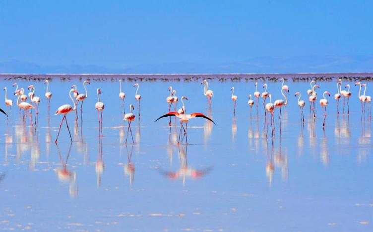 Dünyanın en büyük flamingo kolonisi Tuz Gölü'nde
