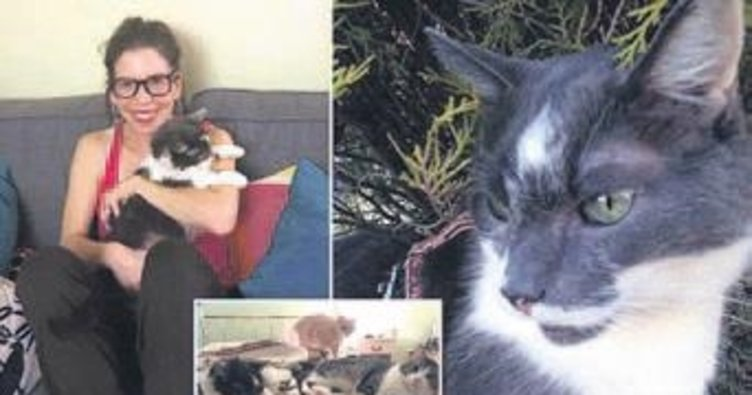 Kediye böbrek nakli 76 bin liraya mal oldu