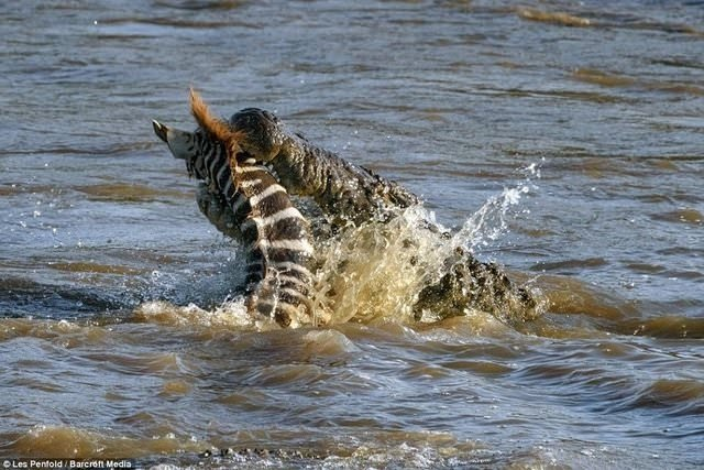 Vahşi doğada af yok!