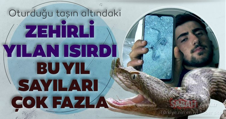 Bingöl'de zehirli yılanın ısırdığı genç Erzurum'da hayata tutundu