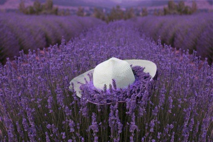 Image result for lavanta bahçeleri ve görseller