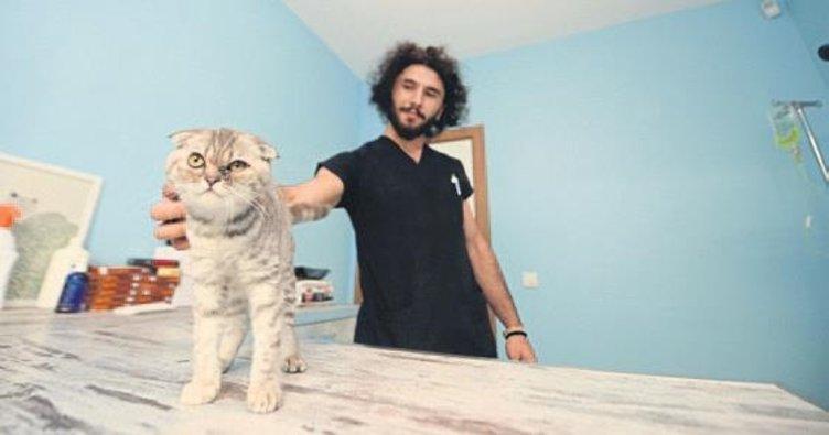 İskoç kedilerine bin kişi talip oldu