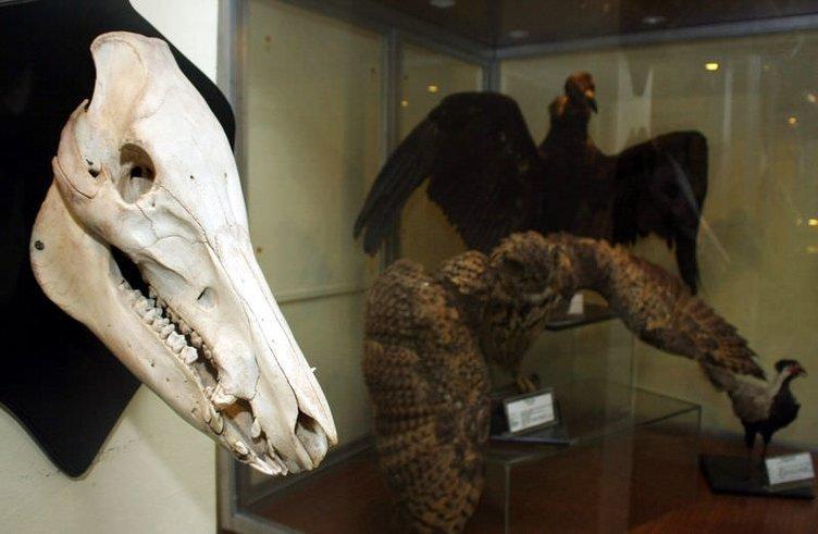 ESOGÜ Zooloji Müzesi