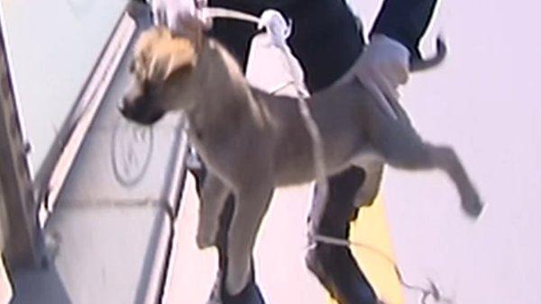 Ankara'da tepki çeken yavru köpeğe işkence görüntüleri! Olayı gören polisler... | Video