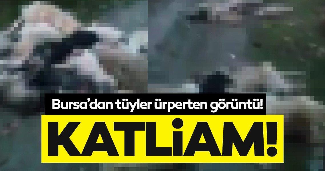 SON DAKİKA: Bursa'da vahşet! Ormanda 50'den fazla köpek ölüsü bulundu,