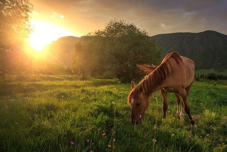 Doğal güzelliği ile Kırgızistan