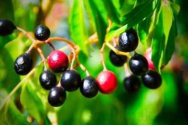 Aktarlardaki 38 bitki yasaklandı