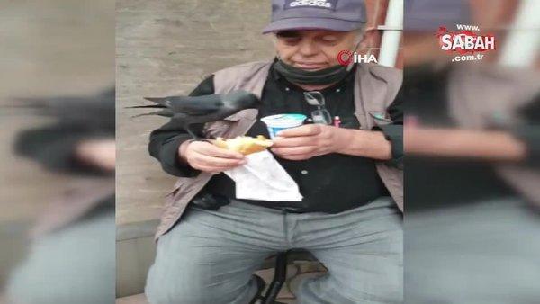 Omzuna konan kargayla birlikte döner yedi, ayran içti   Video
