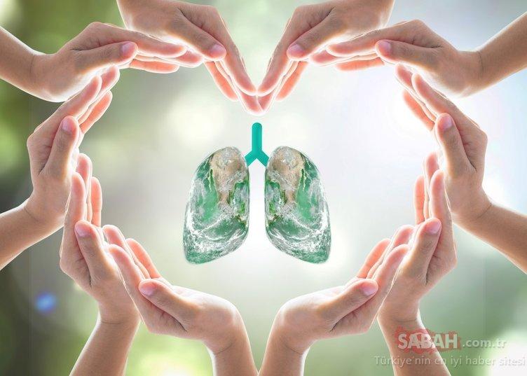Sigara korona virüsün ciğerlere yerleşmesini kolaylaştırıyor! İşte ciğerleri temizleyen mucizevi besinler