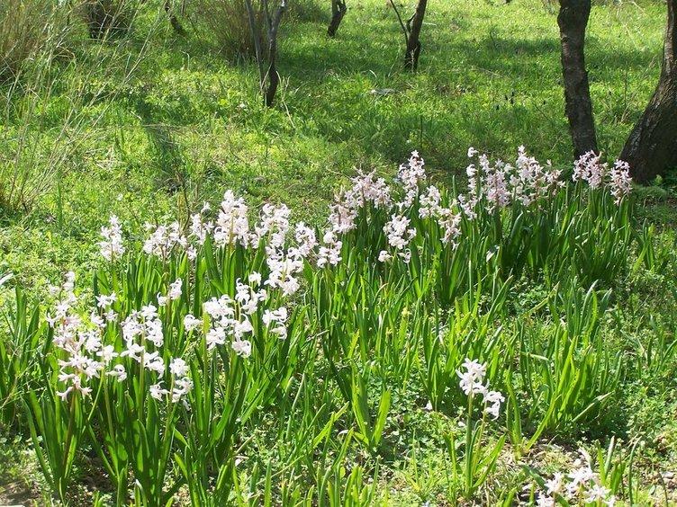 Hangi bölgede hangi bitki yaygın olarak yetişiyor