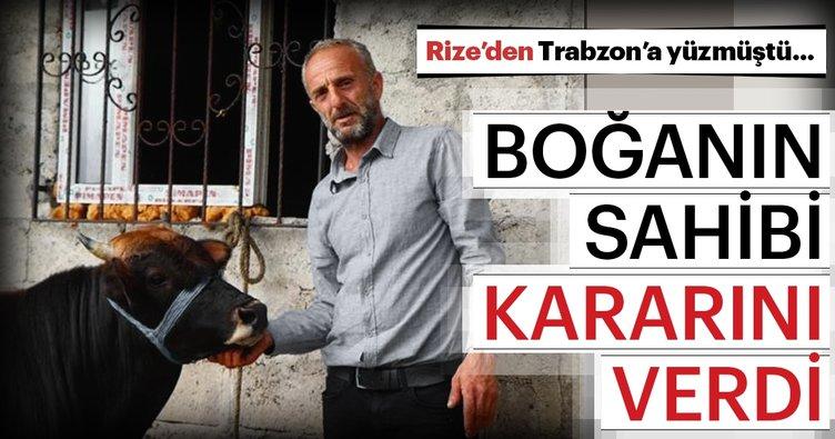 Rize'den Trabzon'a yüzen boğanın sahibi kararını verdi