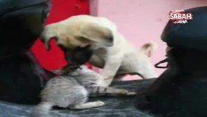 Bursa'da kedi ve köpeğin dostluğu görenleri hayran bırakıyor