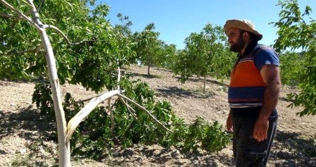 Mersin'de kuvvetli rüzgar! Bahçeler ve bağlar büyük zarar gördü - En ...