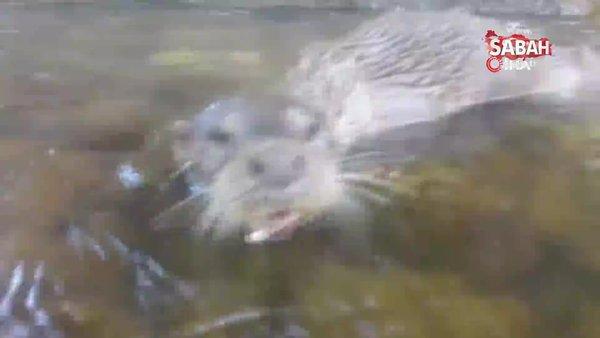 Bursa'da yıllar sonra ilk kez görülen yaratığa skandal feci saldırı   Video